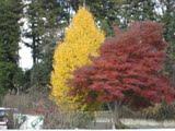 Tochigi - Outono
