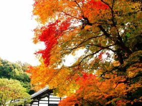Japão - Outono